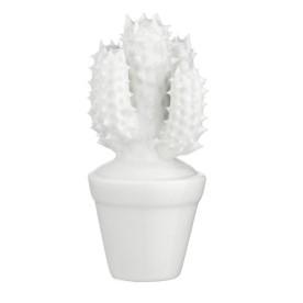 petit-cactus-blanc