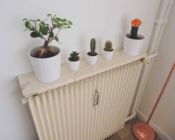 01.cactus-ikea