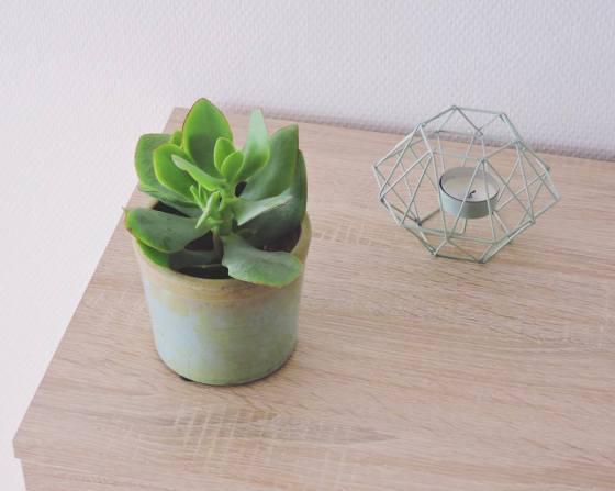 06.succulente-pot-mint