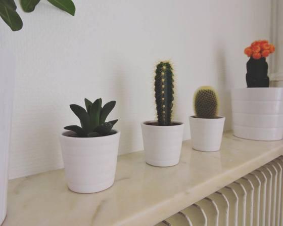 19.cactus-ikea