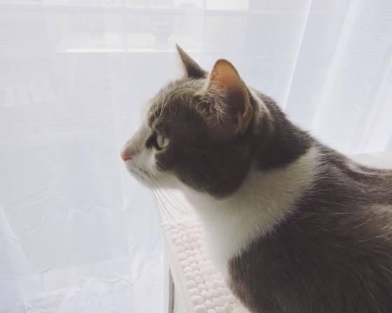26.petit-chat-damour